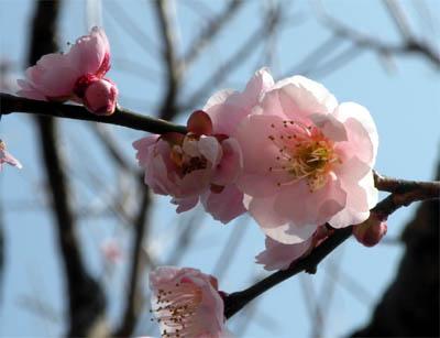 花咲く.jpg